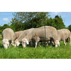 Filet à mouton ovinet
