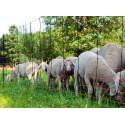 Filets à moutons