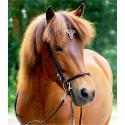 Equitation Islandaise et le Horse Ball